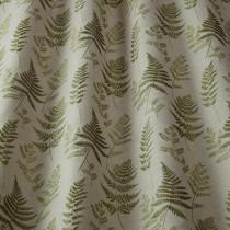 Ferns - Willow